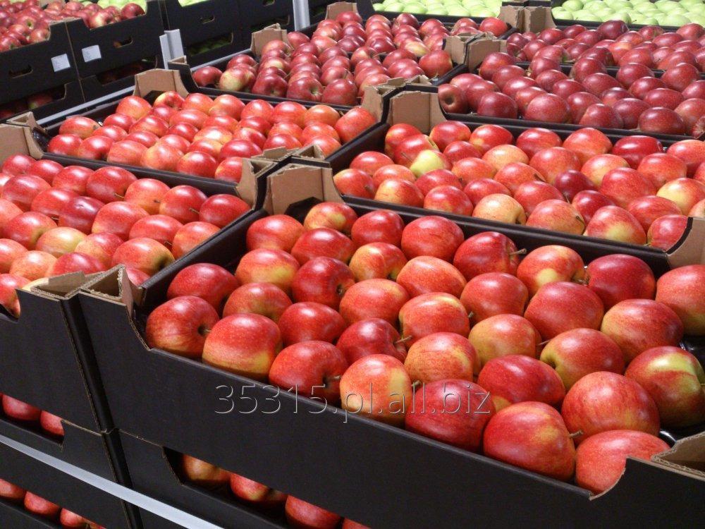 Kupić Jabłka - Jonagored