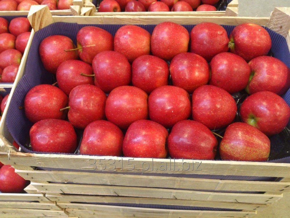 Kupić Jabłko - Red Jonaprince