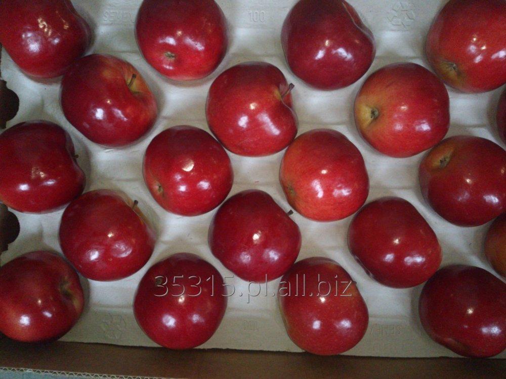Kupić Jabłka woskowane