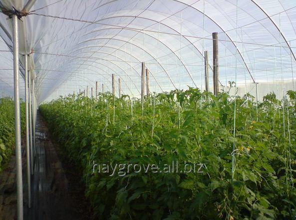 Kupić Tunel foliowy szpalerowy dla upraw wymagających podpór - ogórków, pomidorów, papryki oraz dla upraw szkółkarskich.
