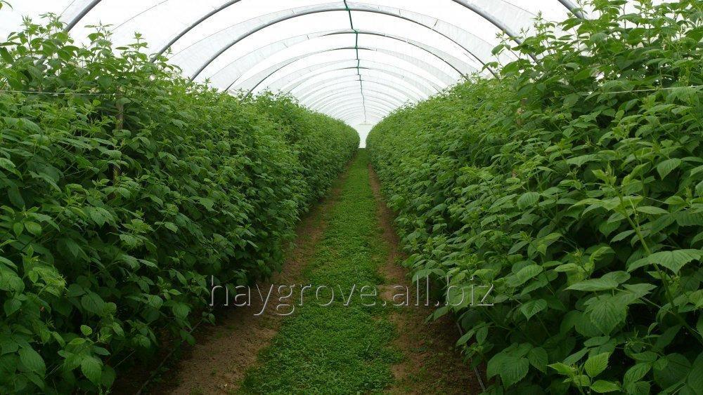Kupić Konstrukcja cieplarni foliowej do upraw jagodowych i szpalerowych