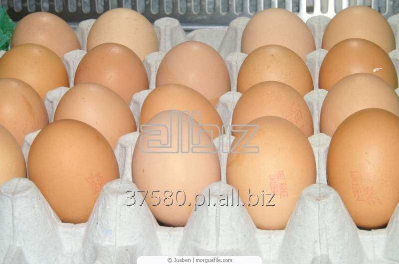 Kupić Wytłaczanki do jajek