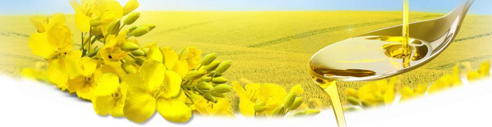 Kupić Olej rzepakowy surowy bezpośrednio od producenta, atrakcyjna cena.