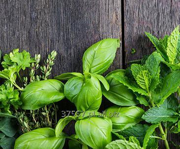 Kupić Wyjątkowe, niespotykane i niecodzienne przyprawy i zioła.
