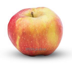 Kupić Jabłka deserowe, różne odmiany