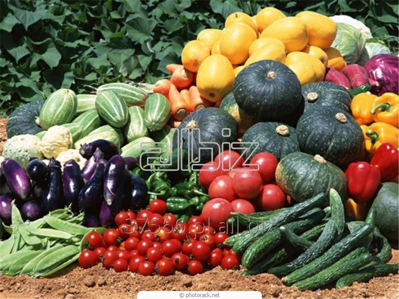 Kupić Żywność ekologiczna