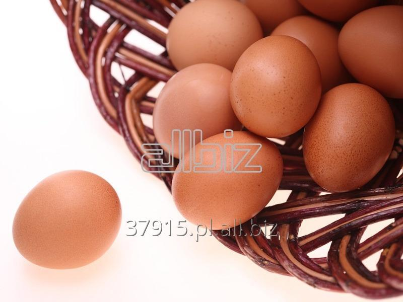 Kupić Jaja kurze