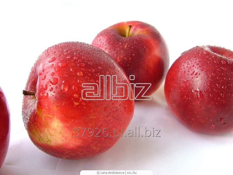 Kupić Jabłka Florina