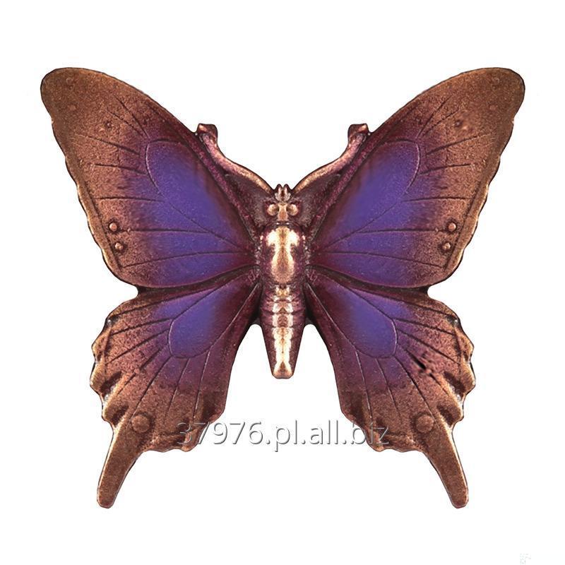 Kupić Motyl