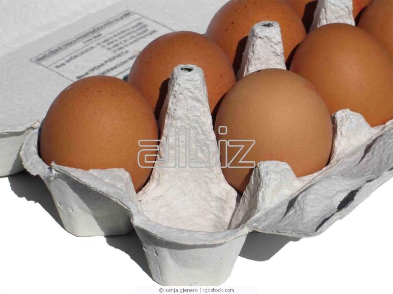 Kupić Jaja jadalne