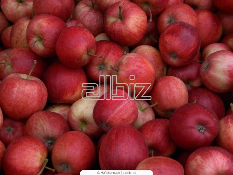 Kupić Jabłka letnie