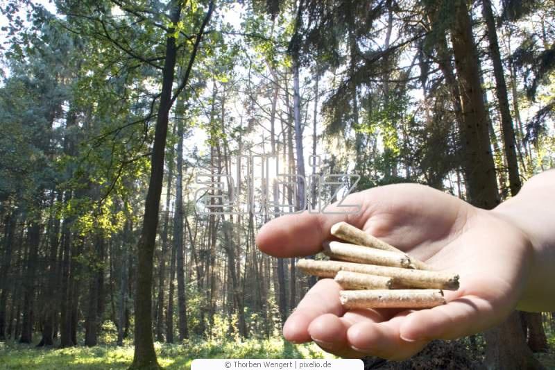 Kupić Pellet z drzew iglastych i liściastych.