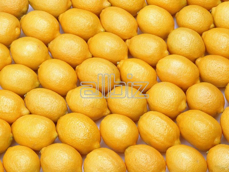 Kupić Świeże, soczyste i jędrne cytryny importowane z ciepłych krajów.