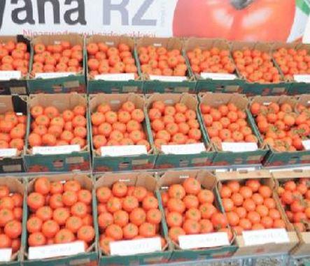 Kupić Pomidory świeże