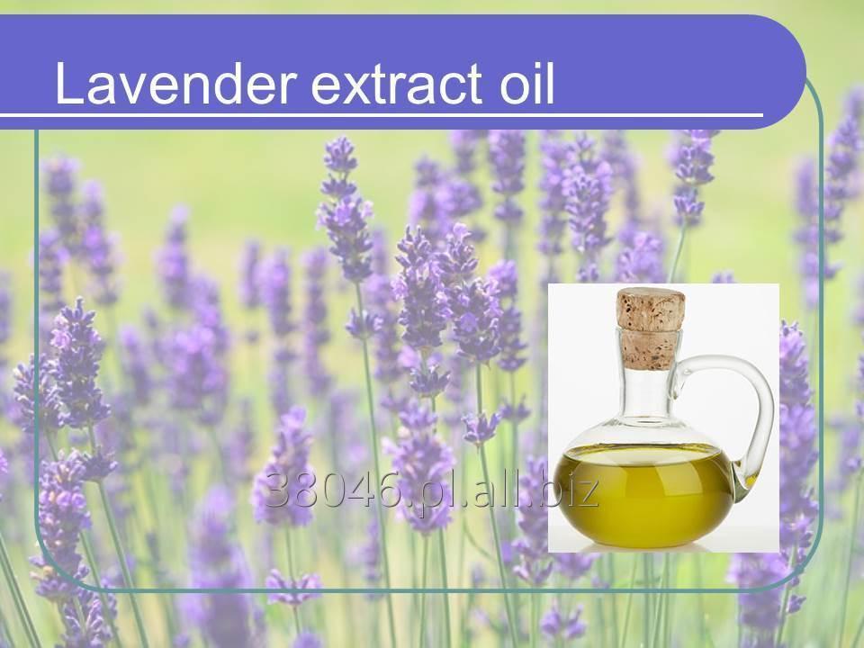 Kupić Olej z lawendy (lavender)