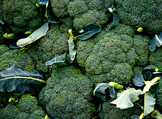 Kupić Brokuły hurt