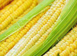 Kupić Słodka kukurydza