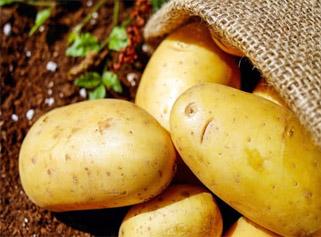 Kupić Polskie ziemniaki, wszystkie odmiany