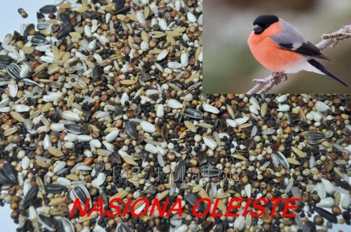 Kupić  Karma dla dzikich ptaków Nasiona Oleiste 30 kg