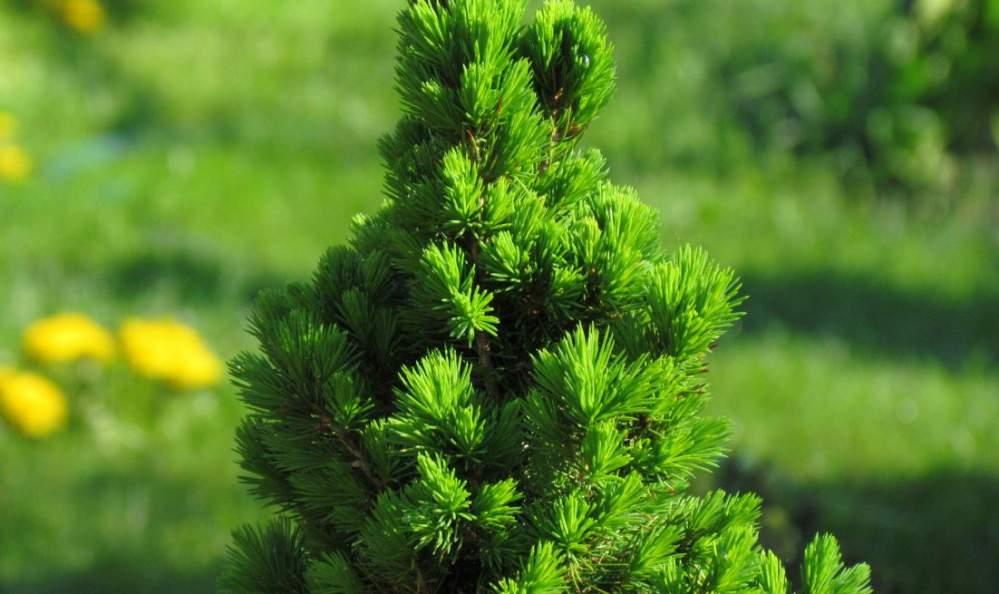 Kupić Sadzonki drzew leśnych