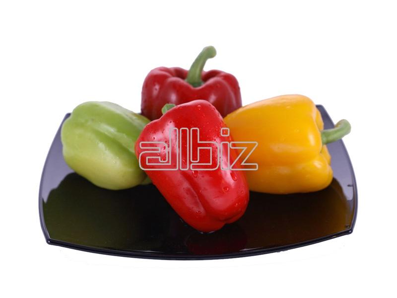 Kupić Papryka świeża dorodna, papryka pakowana na eksport w ilości minimalnej 20 ton