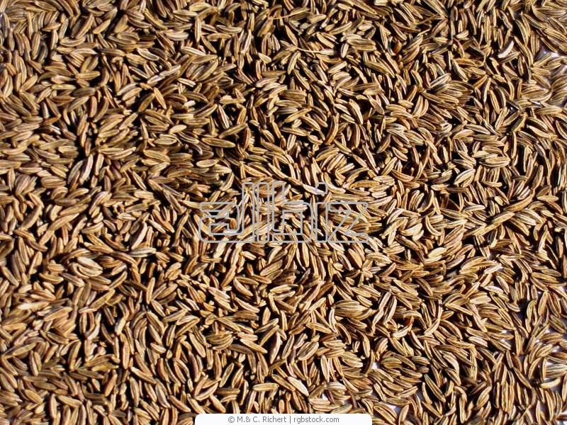 Kupić Kminek w nasionach pakowany próżniowo na eksport
