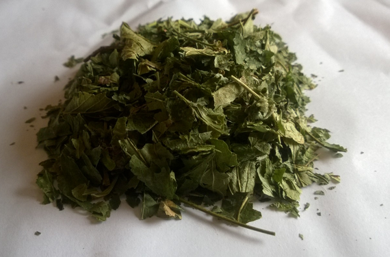 Buy Blackcurrant leaf (Folium Ribis nigri) dried, wholesale
