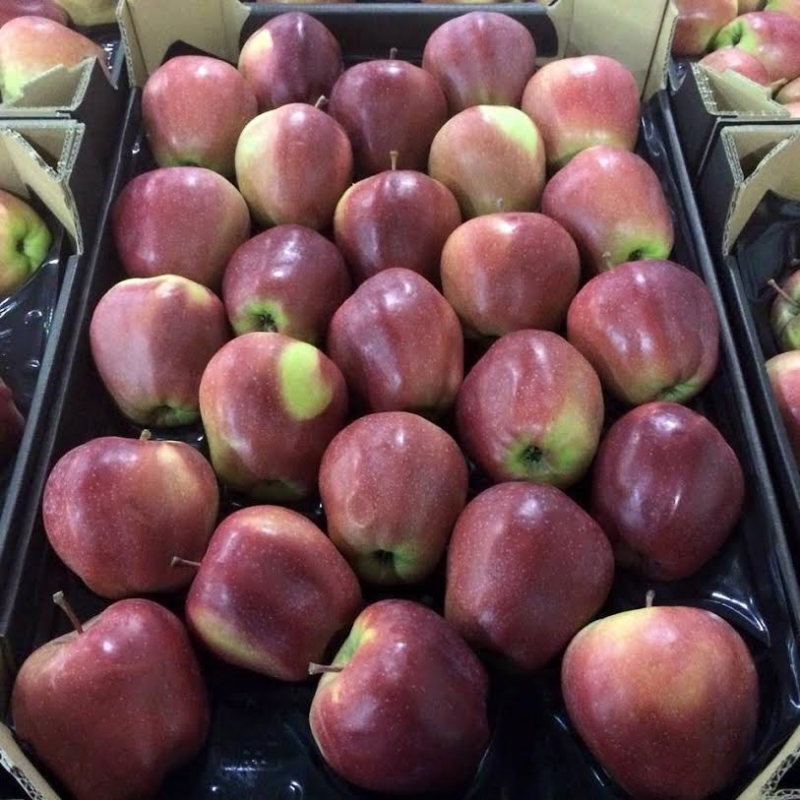 Buy Polish apples of Gloster, only large quantities of wholesale całosamochodwe throughout the year !!! super quality !!!