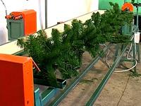 Kupić Maszyny do produkcji choinek