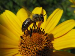 Kupić Preparaty owadobójcze