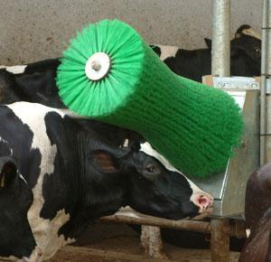 Kupić Wyposażenie obór - szczoty dla bydła