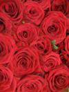 Kupić Róże