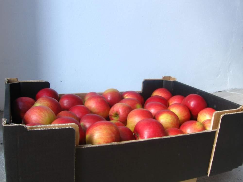 Kupić Jabłko, różne odmiany: idared,jonagored, champion, lobo, cortland, delikates i inne.