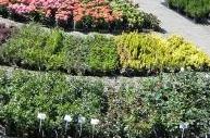 Kupić Rośliny