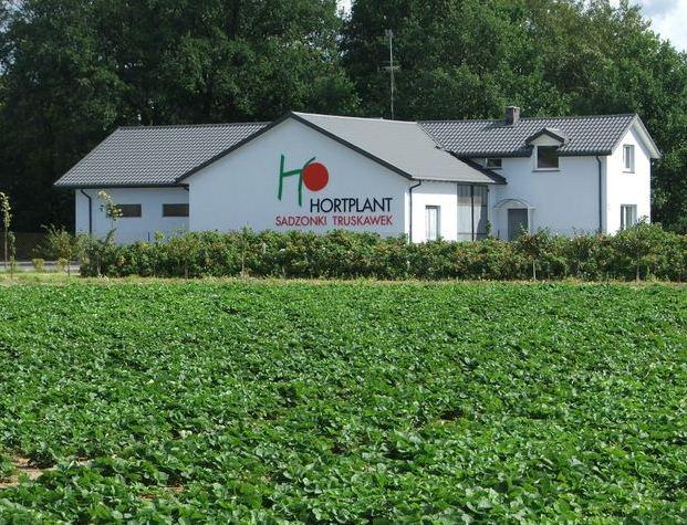 Kupić Widok na plantację truskawek firmy Hortplant