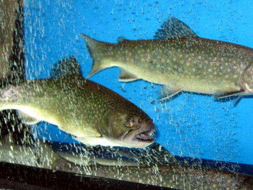 Kupić Napowietrzanie w hodowli ryb