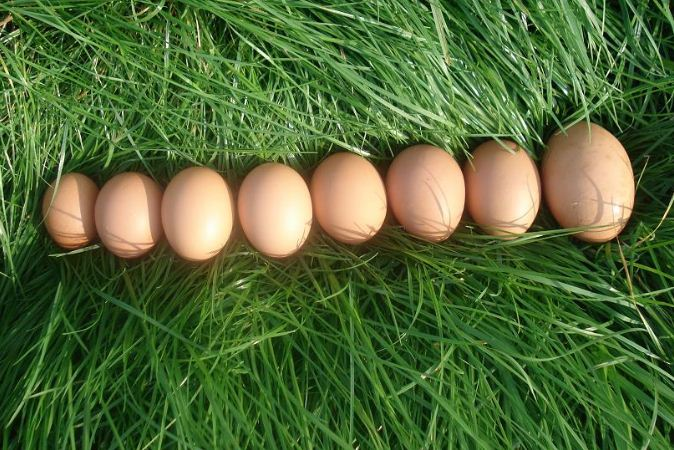 Kupić Jajka kurze
