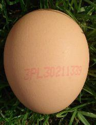 Kupić Jajka