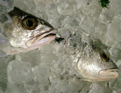 Ryby mrożone. Ryby mrożone w całości i filety