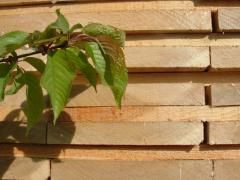Drewno specjalne