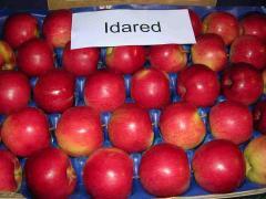Apples Idared