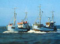 Sieci rybackie flądrówki, dorszówki, torbutówki, drgawice, łososiowe i inne zgodne ze zleceniem klienta.