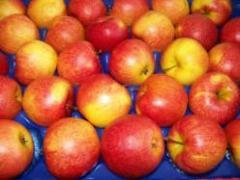 Jabłka Jonagold
