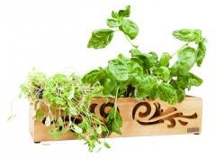 Skrzynka na zioła