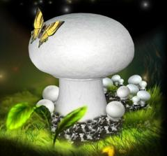 Pieczarki - uprawa świeżych grzybów