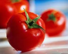 Pomidor ekologiczny biologicznie chroniony