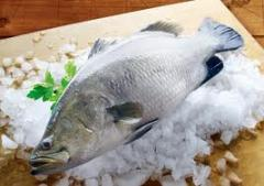 Fish, fresh frozen