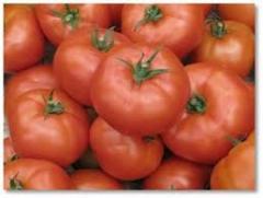 Pomidory odmiana mięsista