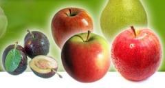 Świeże owoce z sadu: jabłka, śliwy, gruszki.