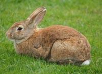 Program żywienia królików